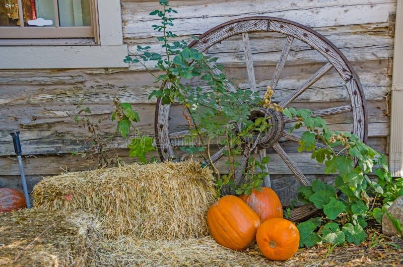 Тыквы, сено, и колесо телеги стоковое изображение
