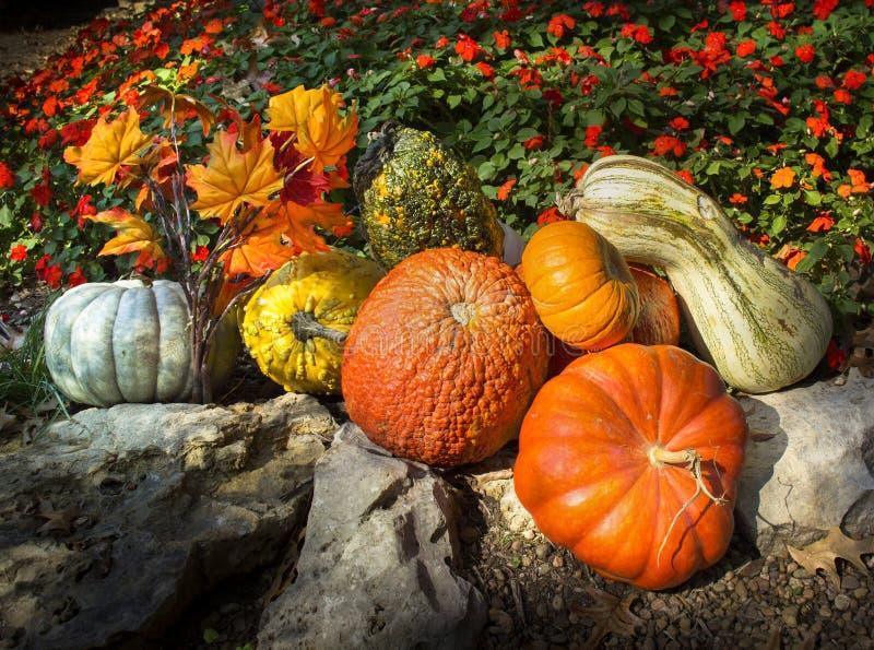 Тыквы, тыквы, листья осени, и последние зацветая цветки говорят благодарение в этом составе стоковое фото
