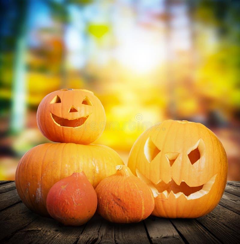 Тыквы хеллоуина на предпосылке леса осени стоковое фото