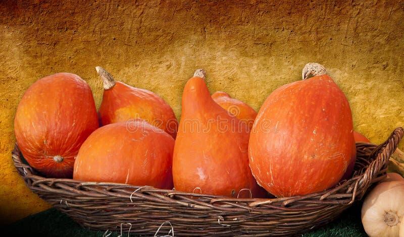 Тыквы Хоккаидо оранжевые в корзине стоковое фото rf