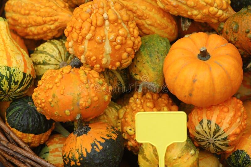 Download тыквы стоковое изображение. изображение насчитывающей nutritious - 6851729