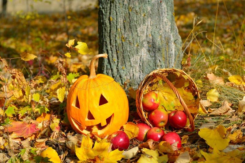 Тыкв-голова хеллоуина против предпосылки леса осени стоковая фотография rf
