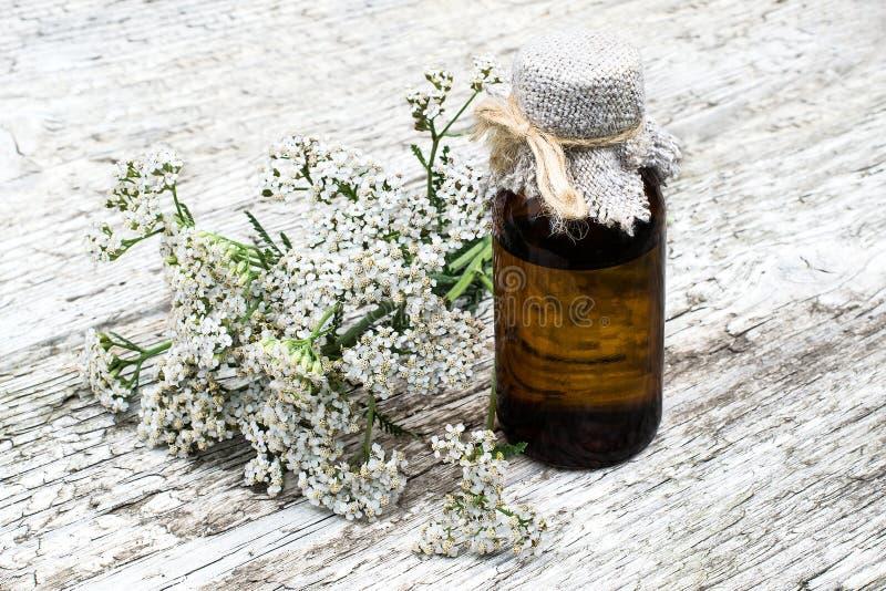 Тысячелистник обыкновенный (millefolium achillea) и фармацевтическая бутылка стоковое фото