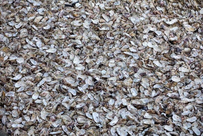 Тысячи пустых раковин съеденных устриц сброшенных на морском дн дне в Cancale, известном для ферм устрицы brittani стоковое фото