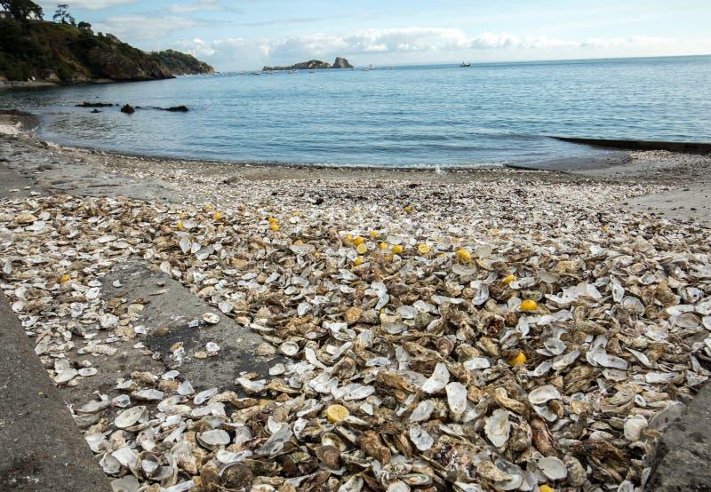 Тысячи пустых раковин съеденных устриц сброшенных на морском дн дне в Cancale, известном для ферм устрицы brittani стоковое изображение