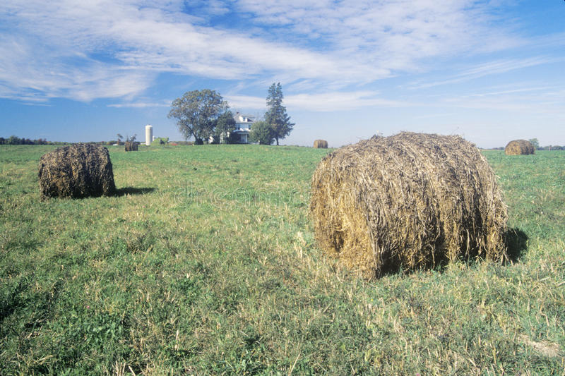 Тюкованное сено в поле стоковые изображения rf