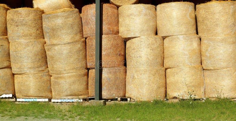 тюкует золотистыми круглыми штабелированную рядками пшеницу штока стоковое фото rf