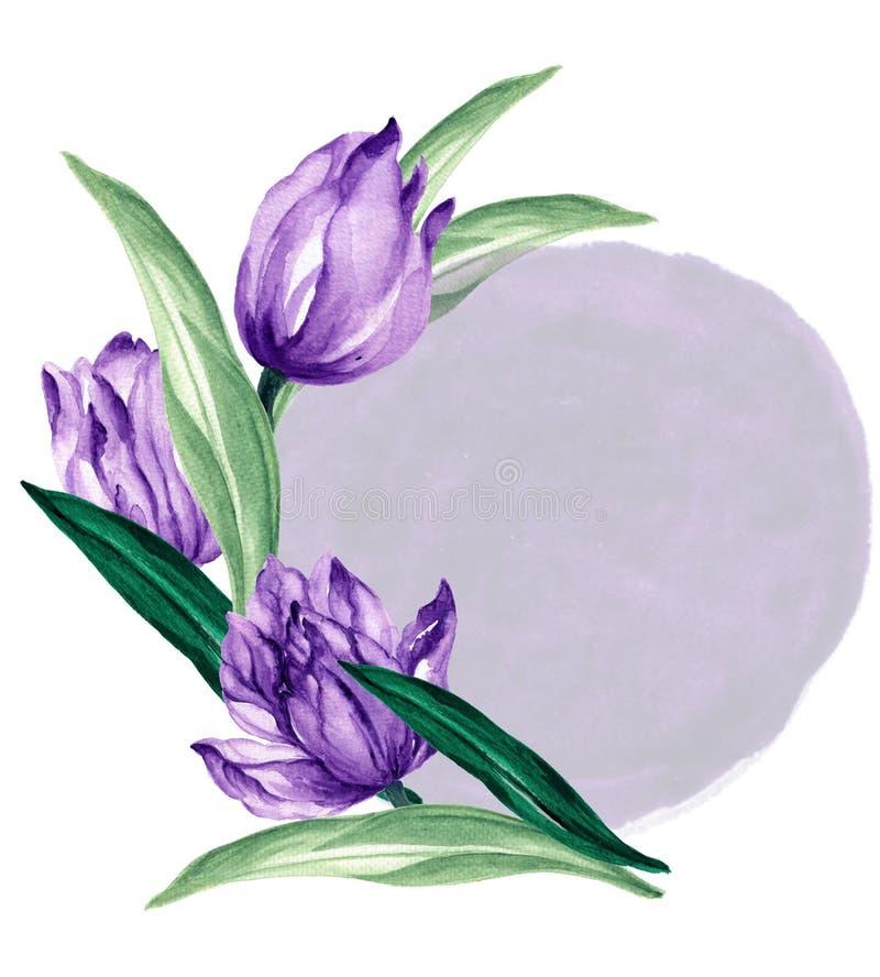 Тюльпанов иллюстрации акварели руки венок листьев листвы цветка сада букета вычерченных фиолетовый улучшает для приветствия пригл стоковые фотографии rf