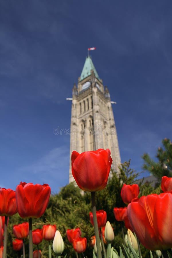 тюльпаны башни мира красные стоковые изображения