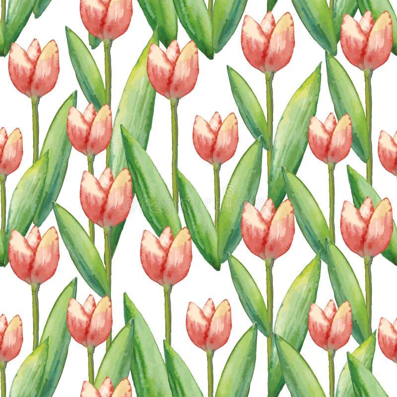Тюльпаны безшовная картина акварели вектора, иллюстрация руки вычерченная цветков весны иллюстрация вектора