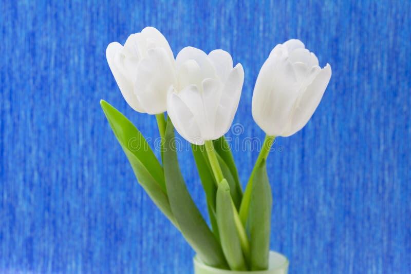 тюльпаны белые стоковое изображение rf