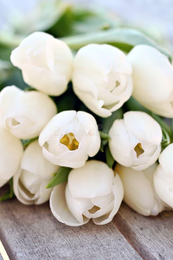 тюльпаны белые стоковые фотографии rf