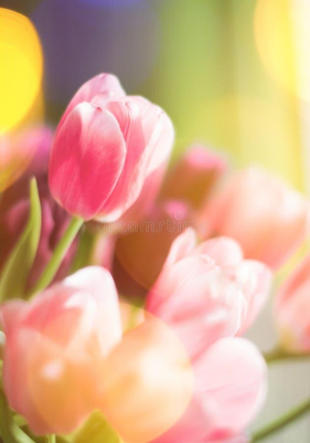 тюльпаны в солнечном свете - флористическом, праздниках весны и концепции подарка на день рождения стоковая фотография