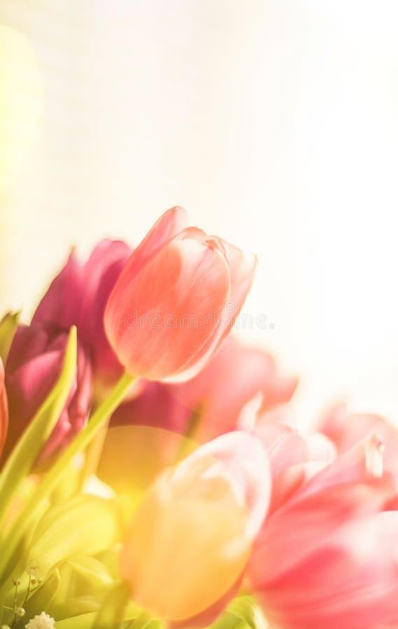 тюльпаны в солнечном свете - флористическом, праздниках весны и концепции подарка на день рождения стоковые фотографии rf