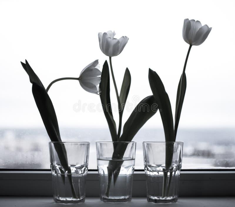Тюльпаны в стеклах на окне стоковое фото