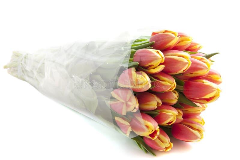 тюльпаны Голландии стоковая фотография rf