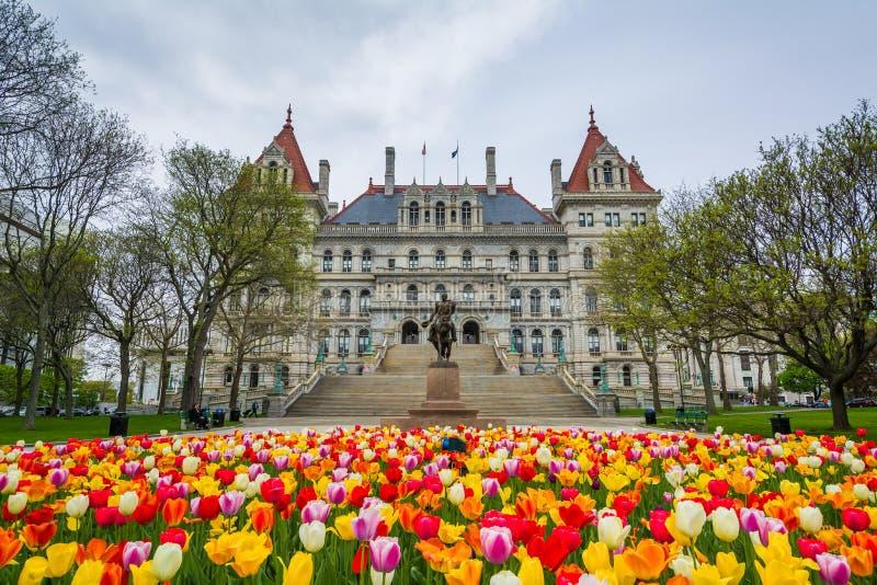 Тюльпаны и капитолий штата Нью-Йорк, в Albany, Нью-Йорк стоковая фотография