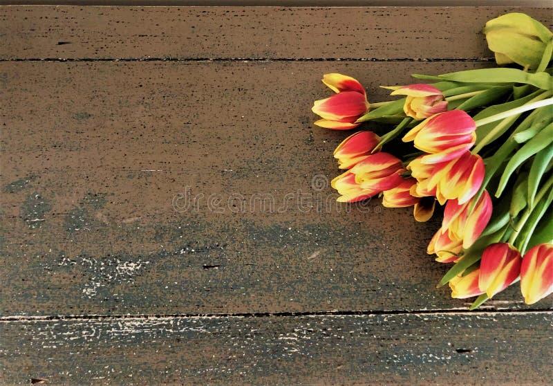 Тюльпаны кладя на таблицу стоковое фото