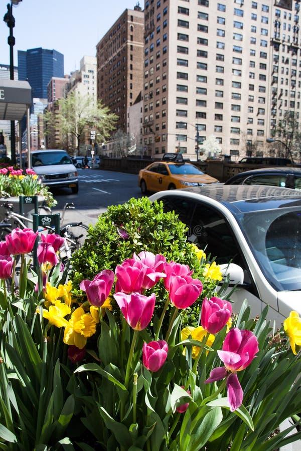 Тюльпаны на бульваре парка в NYC во время весеннего сезона увиденного в Нью-Йорке стоковое фото rf