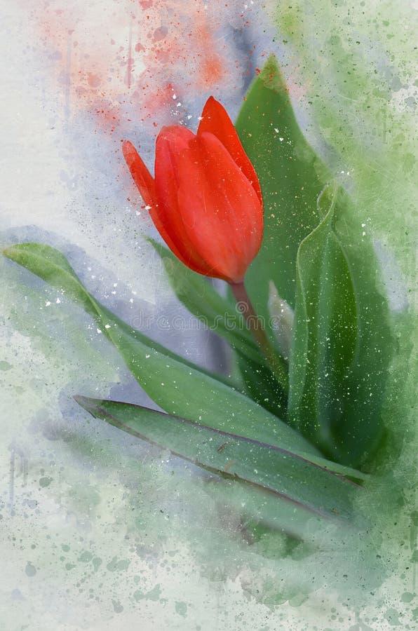 Тюльпан покрашенный акварелью красивый красный бесплатная иллюстрация