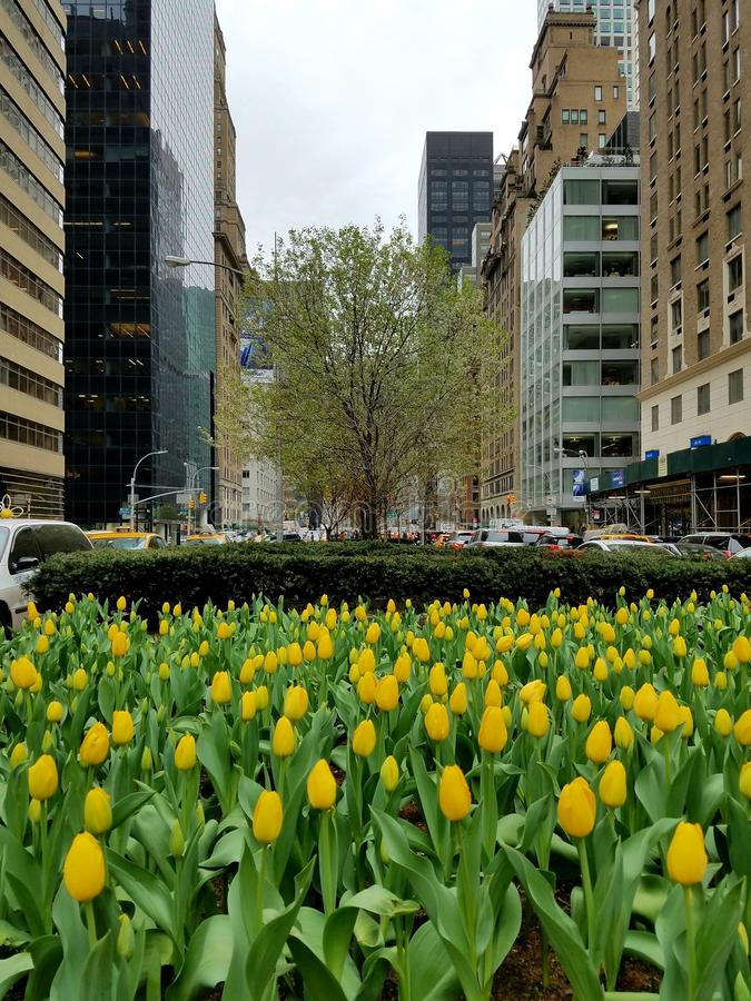 Тюльпаны бульвара парка стоковое изображение rf