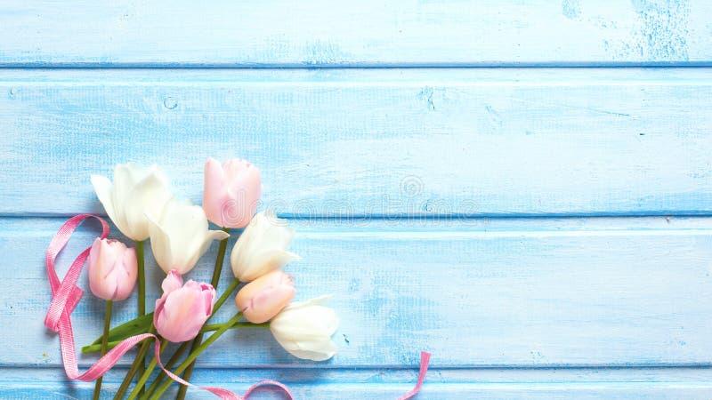 Тюльпаны весны белые и розовые весны и розовая лента на голубом w стоковое изображение