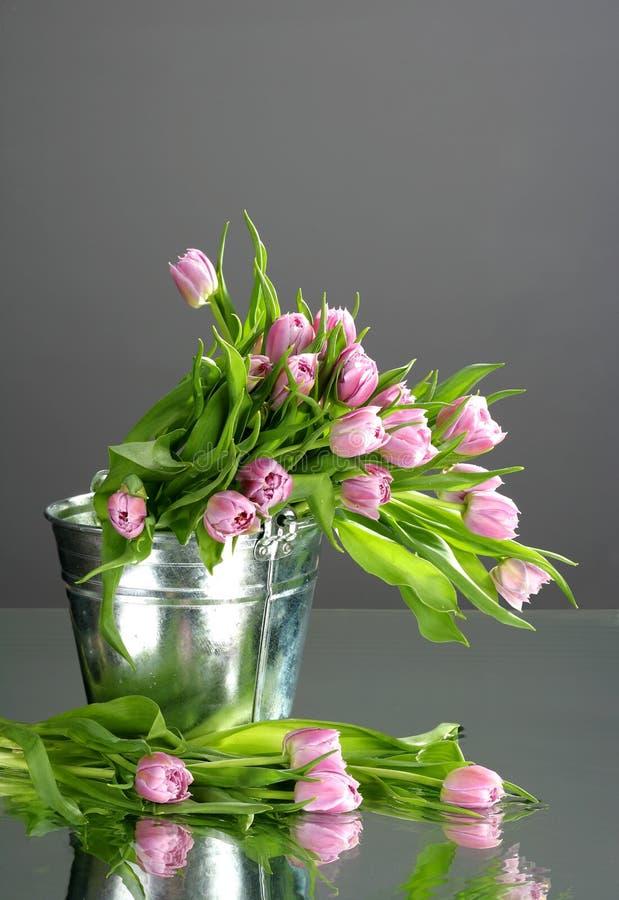 Тюльпаны в малом ведре с отражением стоковая фотография