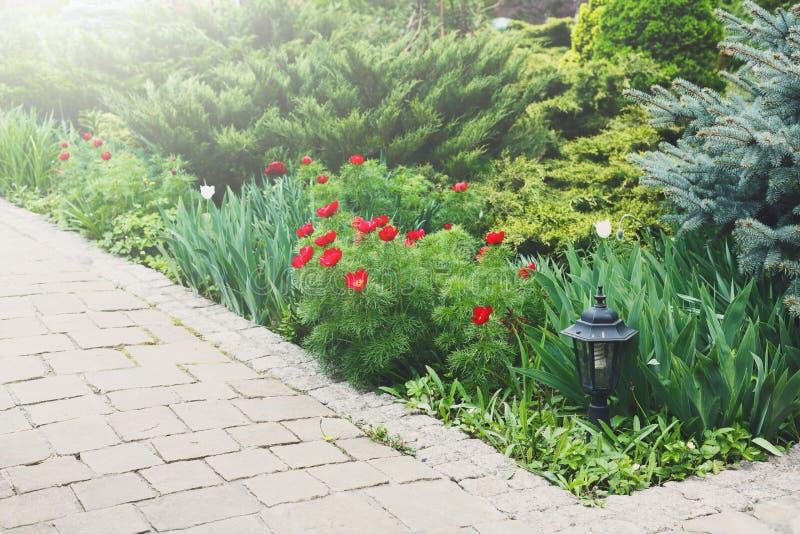 Тюльпаны в саде, дизайне ландшафта стоковые фото