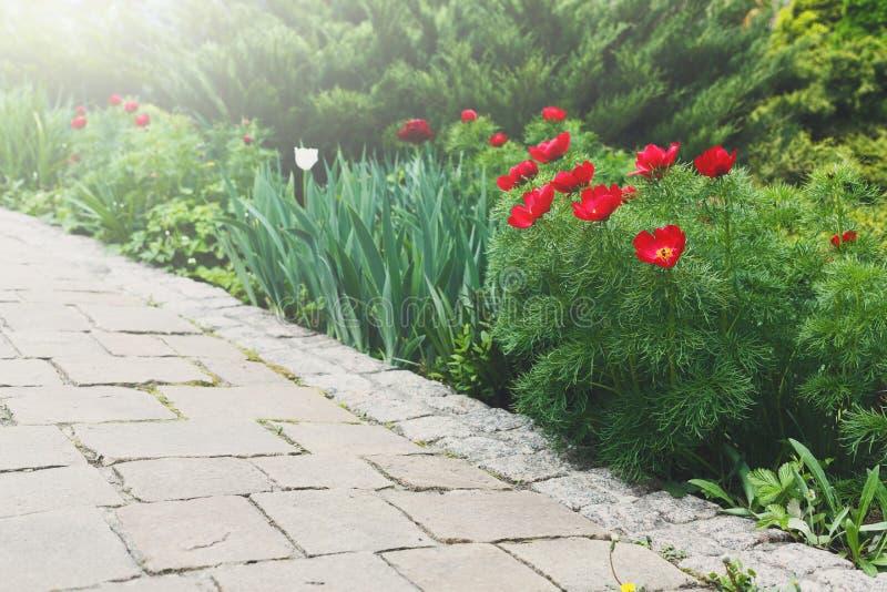 Тюльпаны в саде, дизайне ландшафта стоковое изображение