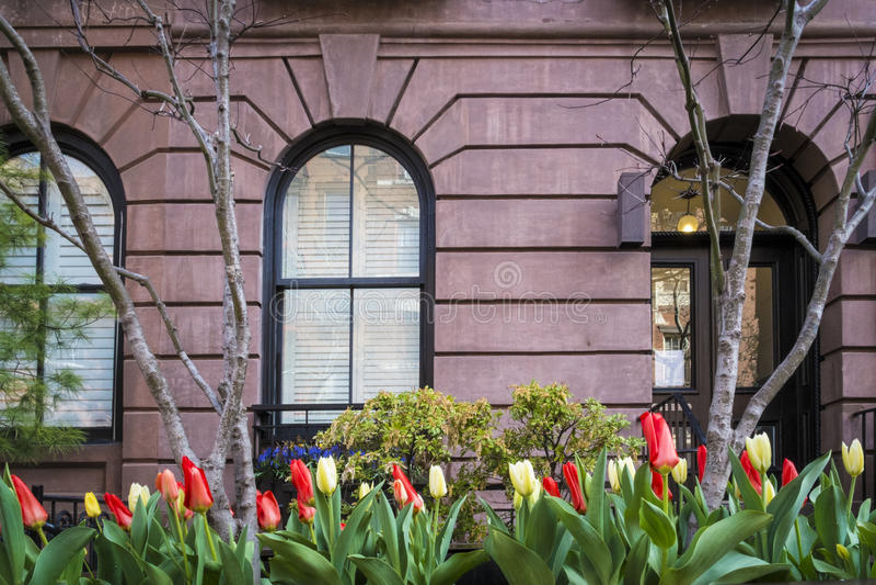 Тюльпаны, жилой дом, Manhattah, Нью-Йорк стоковое изображение rf