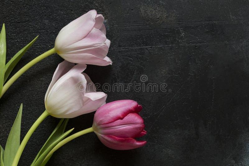 Тюльпаны на черной предпосылке стоковая фотография rf
