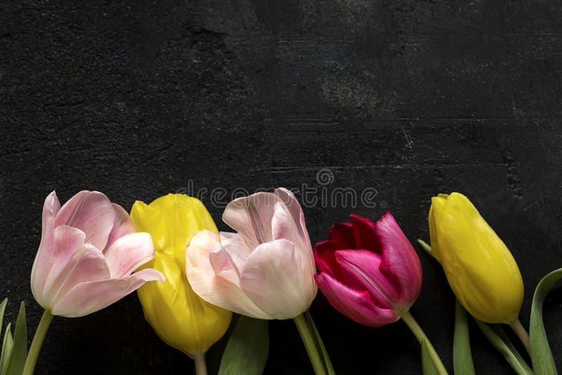 Тюльпаны на черной предпосылке стоковые фотографии rf