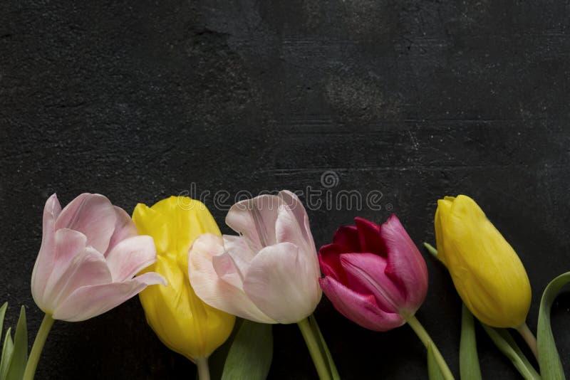 Тюльпаны на черной предпосылке стоковые фото