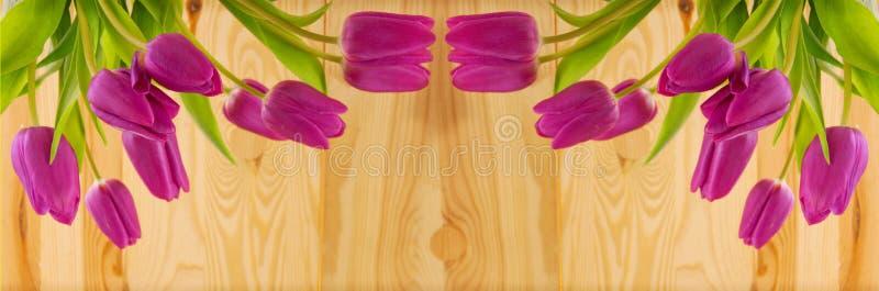 тюльпаны предпосылки розовые стоковая фотография