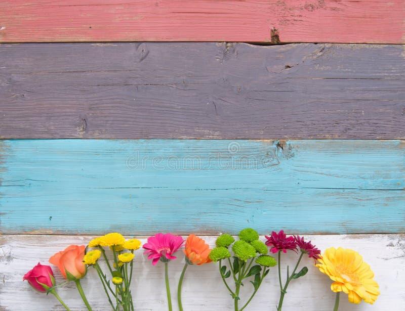 тюльпан весны фокуса цветка края предпосылки далекий стоковая фотография rf