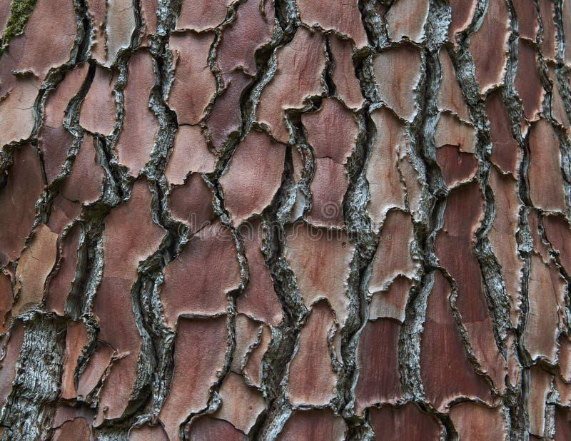 Тяжелая тропическая текстура в Батуми стоковые фотографии rf