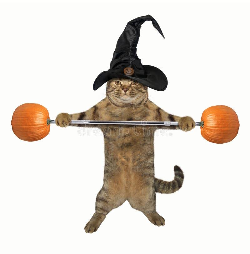 Тяжелоатлет 3 кота стоковое фото rf