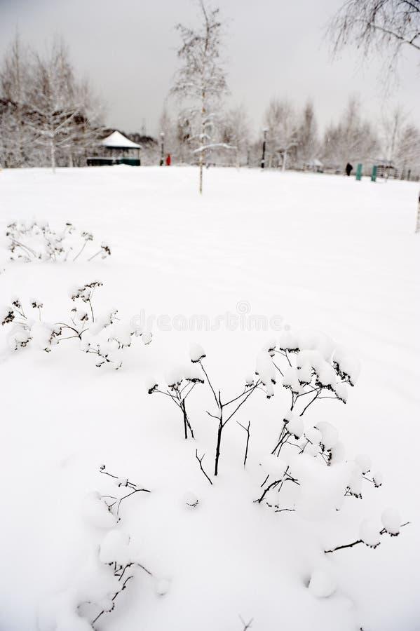 тяжелый снежок парка moscow стоковое изображение