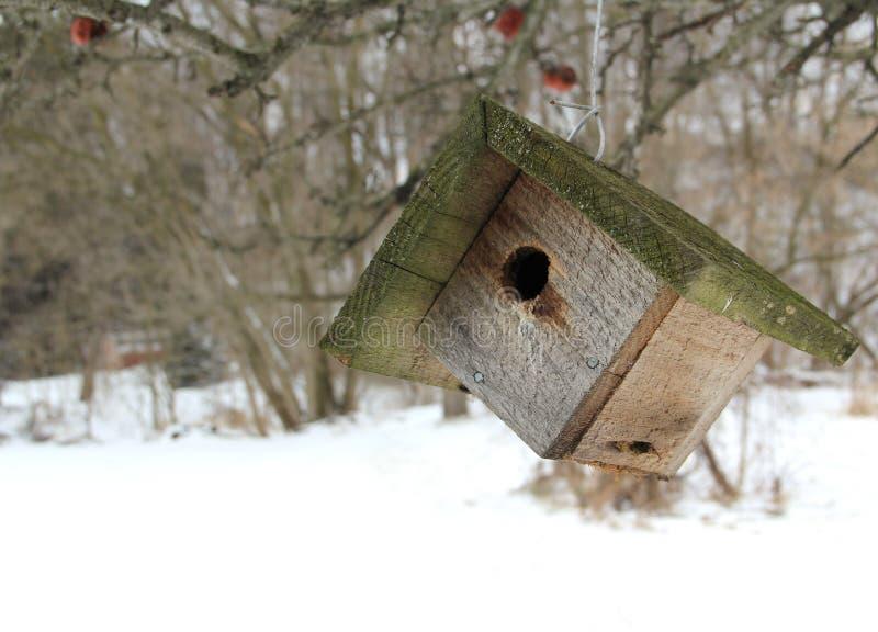 Убежище птицы на зябком после полудня зим стоковое фото