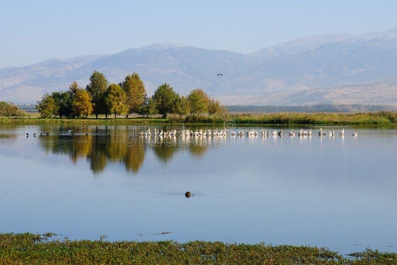 Убежище птицы Agamon Hula стоковое изображение rf