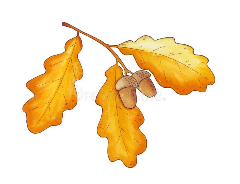 дуб листьев осени жолудей бесплатная иллюстрация