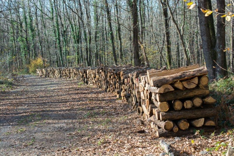 Увольняйте деревянные хоботы запаса журналов дерева сложенные вверх стоковое изображение