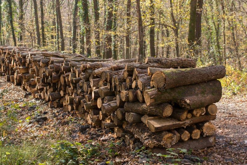 Увольняйте деревянные хоботы запаса журналов дерева сложенные вверх стоковые фото