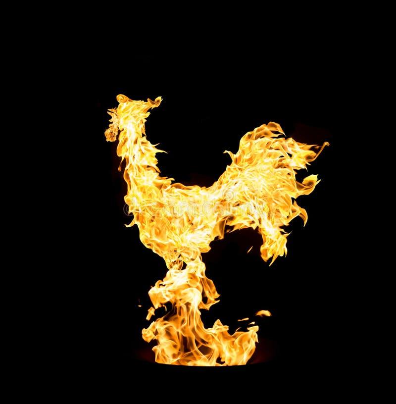 Увольняйте петух, символ нового 2017 год Коллаж фото желтых элементов пламени на черной предпосылке стоковая фотография
