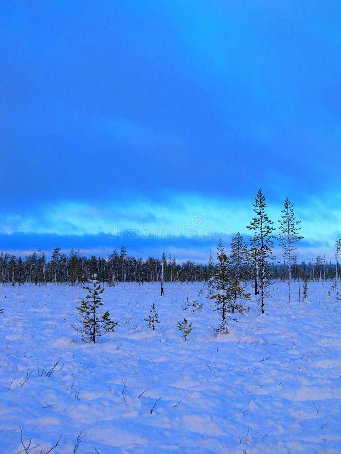 Увядать светлый предыдущего дня зим Болото Snowy, красивое голубое небо стоковые фотографии rf