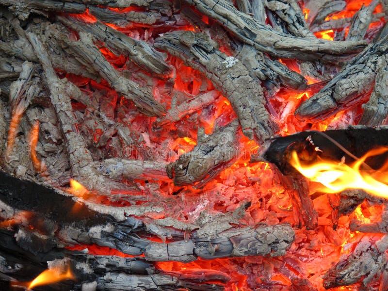 Угли горят в огне стоковые фотографии rf