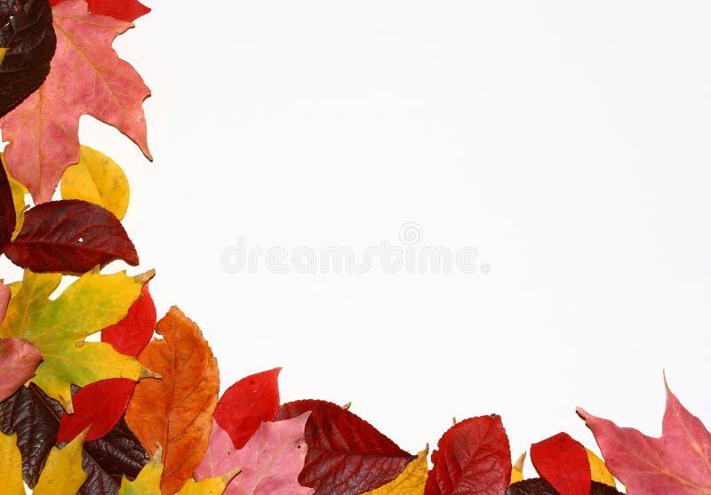 угловойые листья падения стоковая фотография