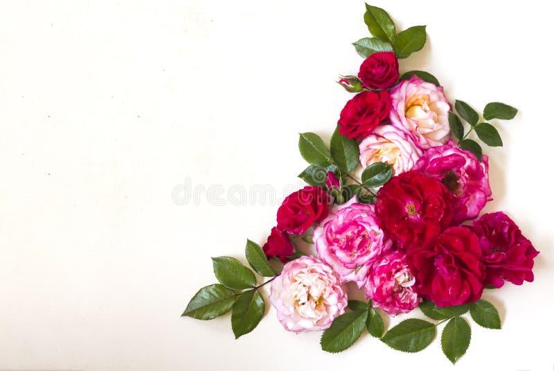 Угловой состав розовых цветков и зеленых листьев на белой предпосылке r стоковые изображения rf