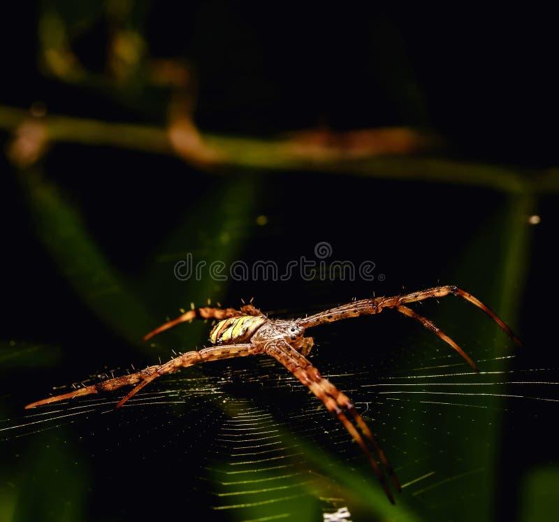 Углы насекомого красиво сделаны по образцу на своем волокне стоковые фото