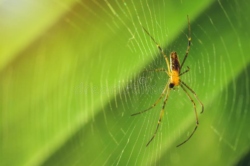 Углы насекомого красиво сделаны по образцу на своем волокне стоковая фотография rf